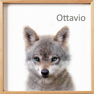 OTTAVIO