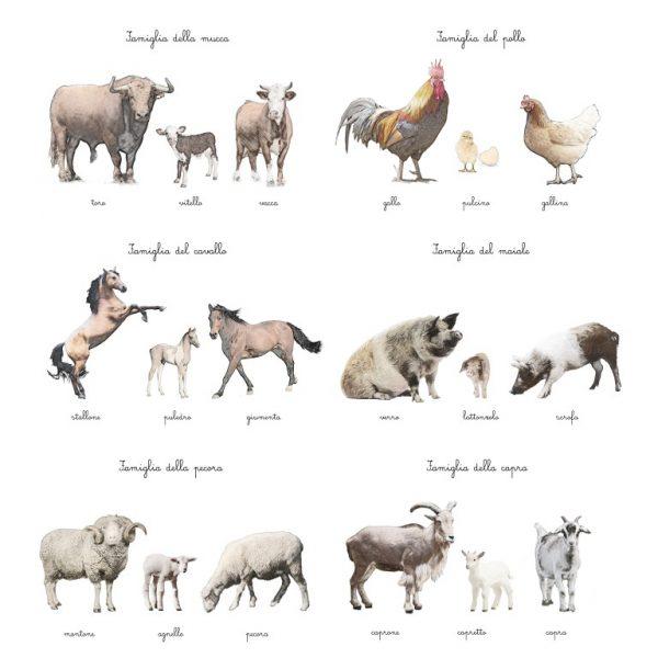 Carte delle nomenclature Famiglie della fattoria Baboo
