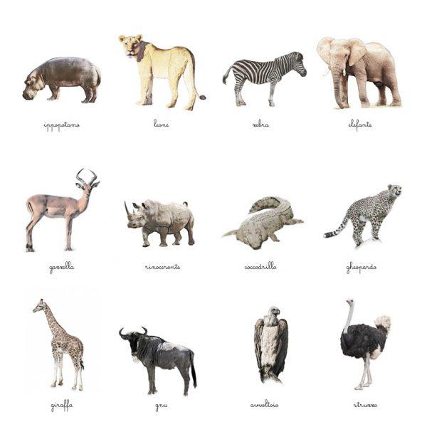 Carte delle nomenclature Animali della savana Baboo