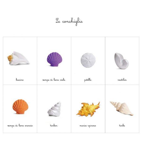 Carte delle nomenclature conchiglie Baboo