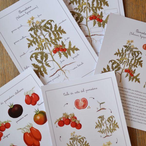 Carte apprendimento Baboo frutta e ortaggi 98 carte