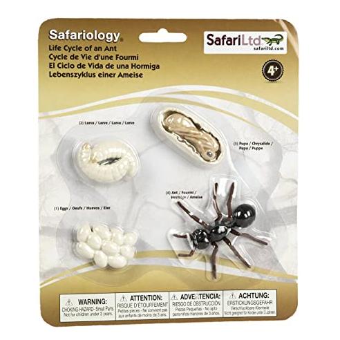 Set ciclo della vita della formica Safari LTD