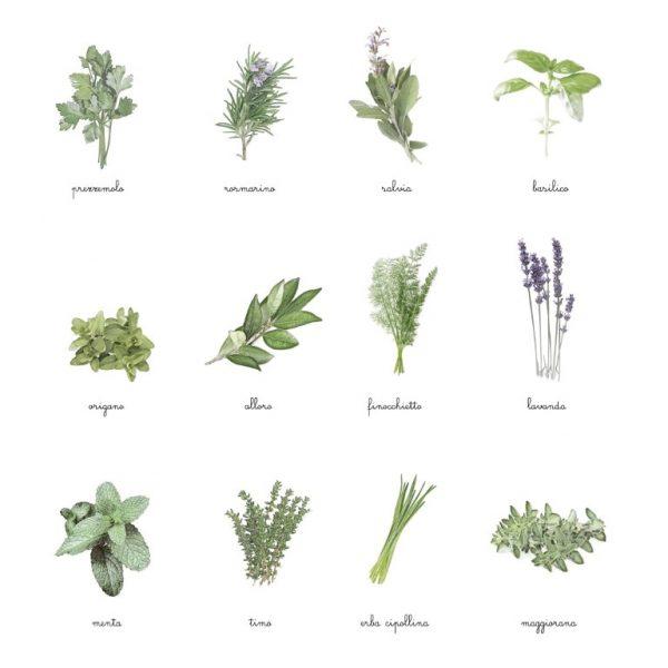 Carte delle nomenclature Erbe aromatiche Baboo