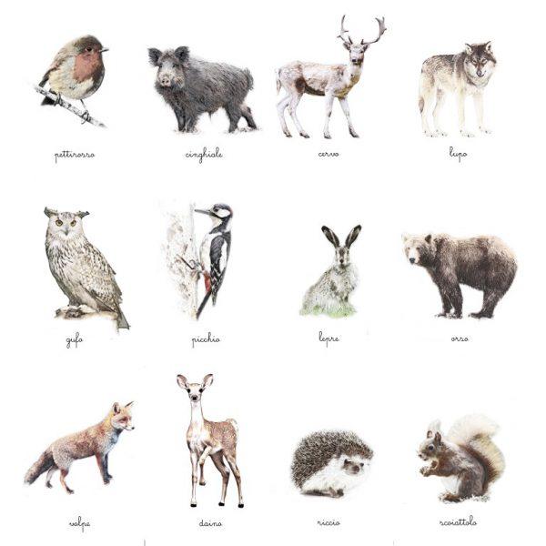 Carte delle nomenclature Animali del bosco