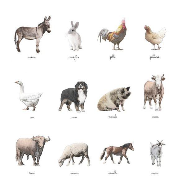Carte delle nomenclature Animali della fattoria Baboo