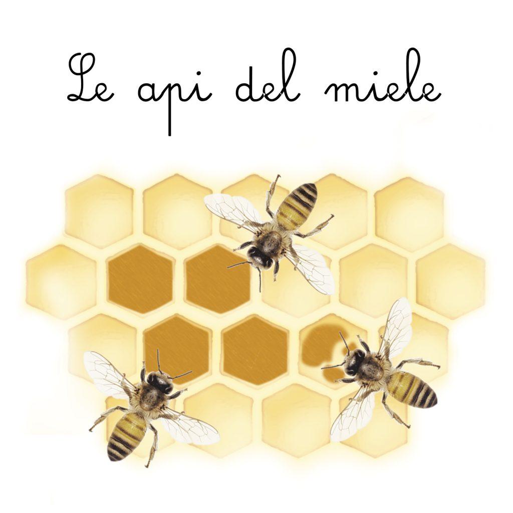 L'ape dei fiori 14 Schede didattiche