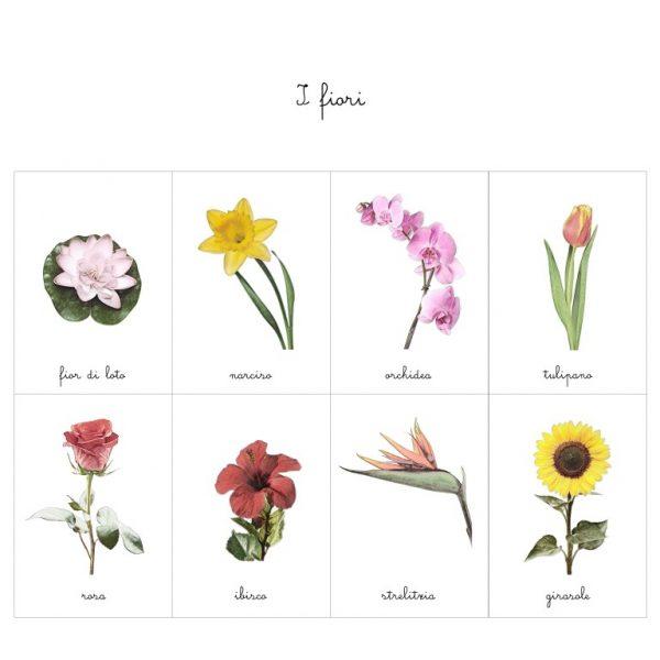 Carte delle nomenclature fiori Baboo