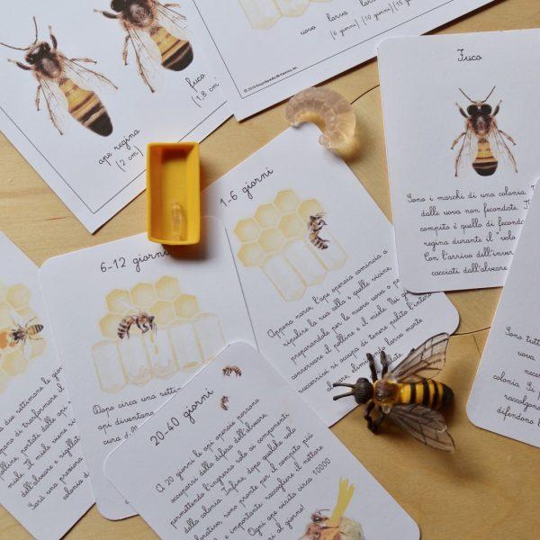 Carte apprendimento Baboo L'ape dei fiori 14 Schede didattiche