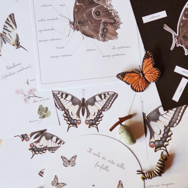 Carte apprendimento Baboo La farfalla 28 Schede didattiche