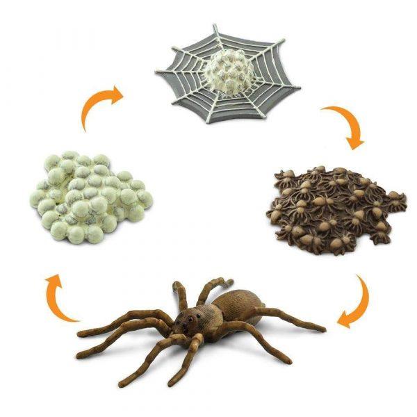 Set ciclo della vita del ragno Safari LTD