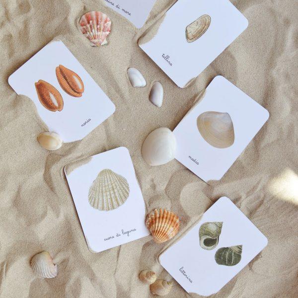 Carte apprendimento Baboo conchiglie 16 carte